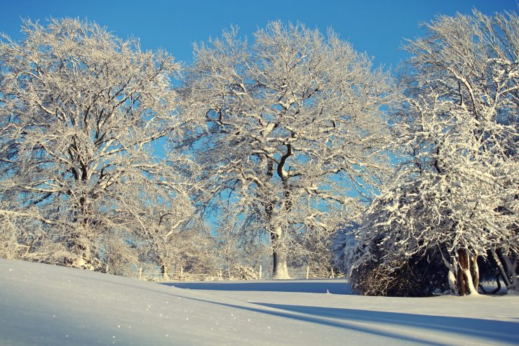 branch-clear-sky-cold-247569.jpg